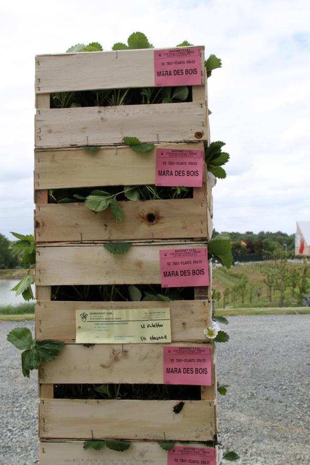 de planteurs pour mettre en place les nouveaux plants de Mara des Bois  ~ Mara Des Bois Culture
